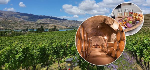 Wine cellar & vineyard lunch